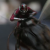 Trailer_Ant_Man_and_the_Wasp_Hombre_Hormiga_Avispa