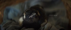 Un_Milagro_Inesperado_Penguin_Bloom_Trailer_2