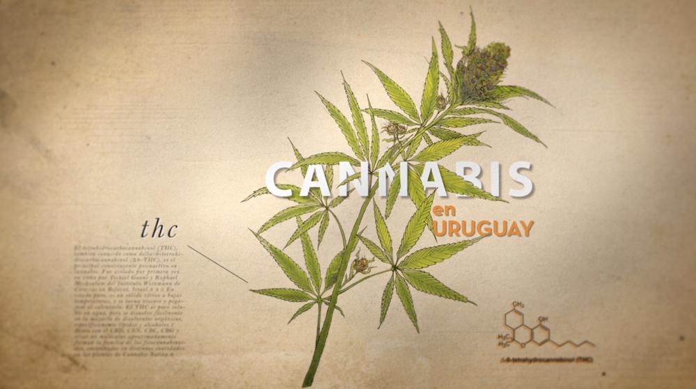 Documental Cannabis en Uruguay imagen 1